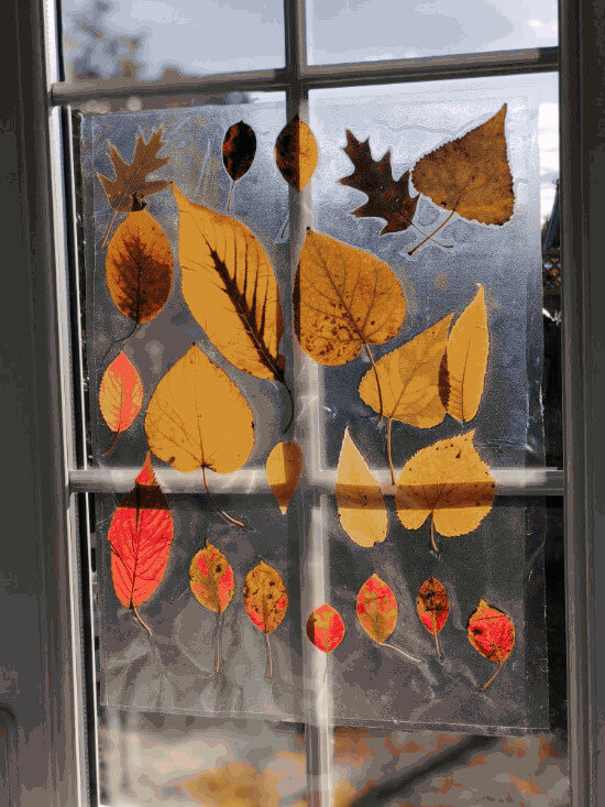 fall craft autumnal suncatcher made with real leaves on window